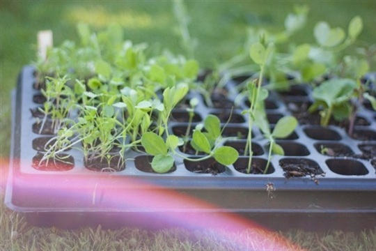How to Grow Your Own Wedding Flowers Part 2 Sowing Outdoors...