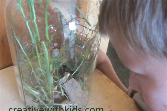 Keeping Jar Pets Habitat Study