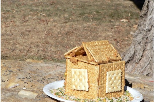 How to Bird House Bird Feeder