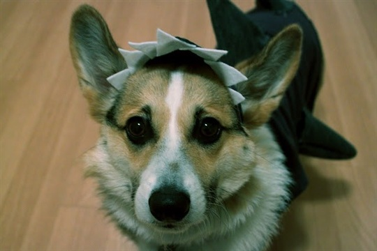 Rouge & whimsy (easy + cheap) DIY dog costume